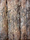 Dackground trä Arkivfoton