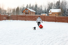 Dad daughter and dog sledding in backyard Stock Images