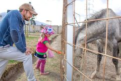 Dad and daughter are fed a horse with a carrot. Photography in nature stock photo