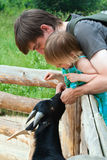 Dad and daughter feedind kids. Father and daughter together feeding goat kid stock photography