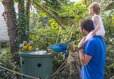Dad and daughter watch how the parrots eat at the zoo. Dad and daughter watch how the tropical parrots eat at the zoo Royalty Free Stock Image