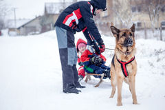 Dad and dog German Shepherd, have fun with the kids in the snow Royalty Free Stock Image