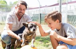 Dad and his son taking care of abandoned dog in animal shelter. Playing with him stock photos
