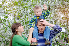 Dad mom and son walking in the blossoming spring garden Stock Photos