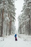 dad rolls children on a snowcat. beautiful winter pine snow-covered forest. nature walk with family stock photo