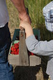 Dad and son berry picking. Summer 2011 Royalty Free Stock Photography