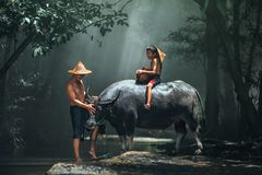 Dad and son this is lifestyle of family farmer at rural Asia. Tr royalty free stock image