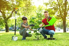 Dad and son planting tree together in park. On sunny day stock image