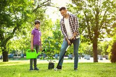 Dad and son planting tree together in park. On sunny day stock photography
