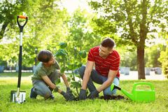 Dad and son planting tree together in park. On sunny day stock photos