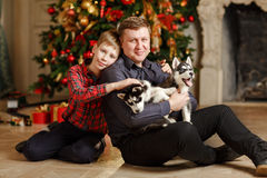 Dad and son with puppies Husky Christmas sitting on a background royalty free stock image
