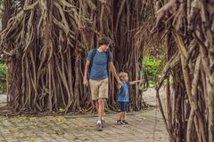 Dad and son in a rainy forest against the background of the roots of a tree royalty free stock photos