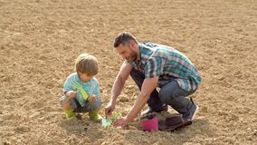 Dad and son take the vegetable on a sunny day in a garden - father and son planting in village. Eco farm worker. Eco stock video