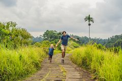 Dad and son tourists in Campuhan Ridge Walk , Scenic Green Valley in Ubud Bali. Traveling with children concept.  royalty free stock image