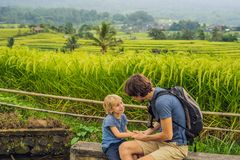 Dad and son travelers on Beautiful Jatiluwih Rice Terraces against the background of famous volcanoes in Bali, Indonesia stock photography