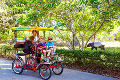 Dad and two little kid boys biking on bicycle in zoo with animal Royalty Free Stock Images