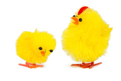 Daddy chick and baby chick Stock Image