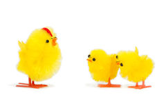 Daddy chick and his two baby chicks listening Royalty Free Stock Photography