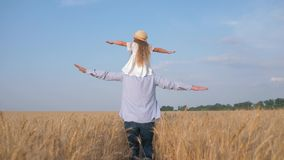 Daddy daughter relationship, young father with little fair child girl on his shoulders spreads his arms to the side and. Goes across yellow yield field in sunny stock footage