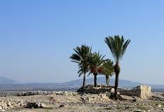 Dadelpalmen amid de ruïnes van Megiddo stock foto
