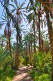 Dadelpalmen in wildernissen, Tamerza-oase, Sahara Desert, Tunesië, Af royalty-vrije stock foto
