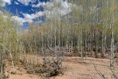 Dades dolinna sceneria, Maroko Obrazy Stock