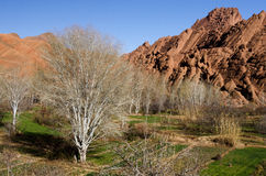 Dades valley. In Morocco, march Stock Images