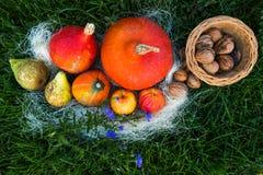 Dadi della pera della mela della zucca su erba verde Immagini Stock Libere da Diritti