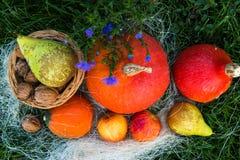 Dadi della pera della mela della zucca su erba verde Immagini Stock