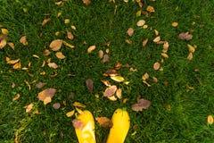 Dadi della pera della mela della zucca su erba verde Fotografia Stock