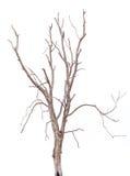 Dados del árbol del aislante Foto de archivo libre de regalías
