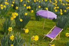 daffodil λιβάδι Στοκ φωτογραφίες με δικαίωμα ελεύθερης χρήσης