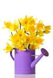daffodil παρουσίαση Στοκ φωτογραφία με δικαίωμα ελεύθερης χρήσης