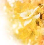 Daffodil в букете Стоковые Фото