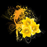 Daffodil. Abstract beatiful yellow daffodil background Stock Image