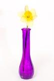 Daffodil Στοκ Εικόνες