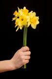 Daffodil Στοκ Φωτογραφίες