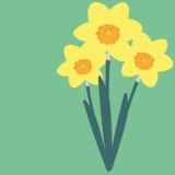Daffodil fotografia de stock