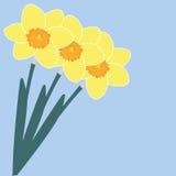 Daffodil Fotos de Stock Royalty Free