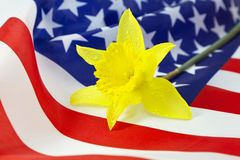 Daffodil on American Flag Stock Photos