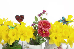 Daffodil arranged with accessory. Daffodil arranged with vases, heart and butterflies as accessories Royalty Free Stock Photos