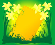 Daffodil Background Royalty Free Stock Photography