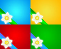 Daffodil  background. The beautiful white daffodil.Daffodils means self-esteem ,self-confidence,think you,look forward to love,pure,affectionate Royalty Free Stock Image