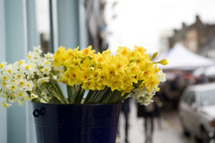 Daffodil in basket Stock Photography