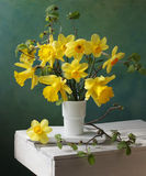 Daffodil royalty free stock photography