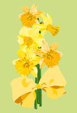 Daffodil bouquet. Bouquet of daffodils with a yellow bow Stock Photo