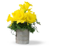 Daffodil bouquet in old-fashioned measuring cup Royalty Free Stock Image