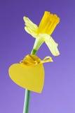 Daffodil con cuore Fotografia Stock Libera da Diritti