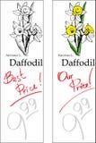 Daffodil - dois preços Imagem de Stock Royalty Free
