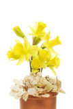 Daffodil and dried hydrangea flowers Stock Photo